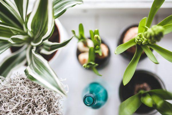 Rośliny w pomieszczeniach: jakie rośliny wybrać do dekoracji domu?